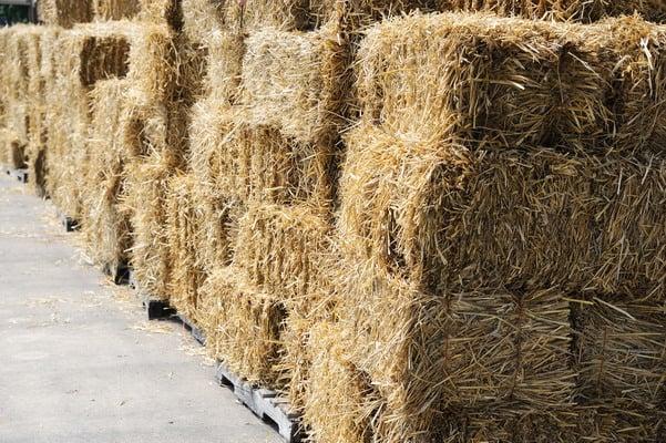 hay-crop